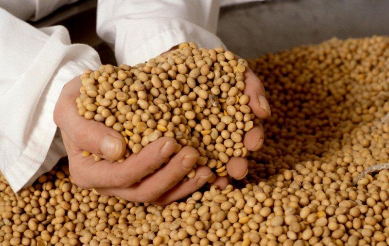 Выращивание бобовых бизнес 41