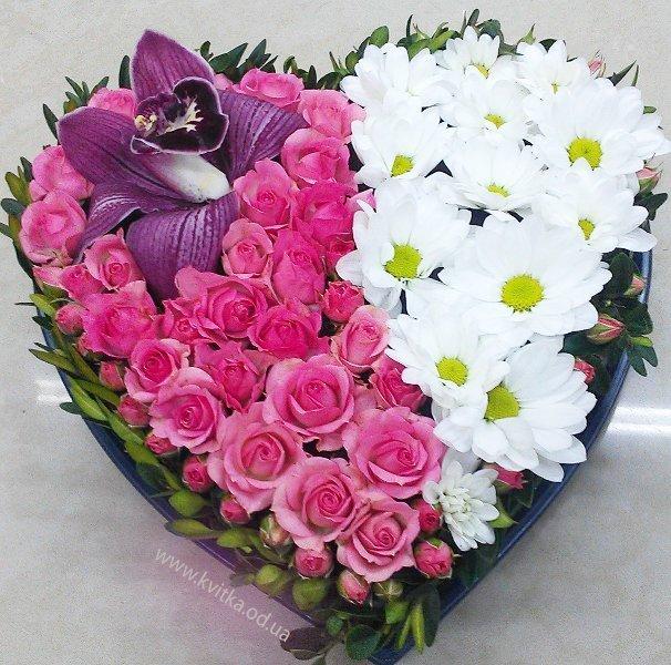 фото цветка уход   flowerscvetisadiru