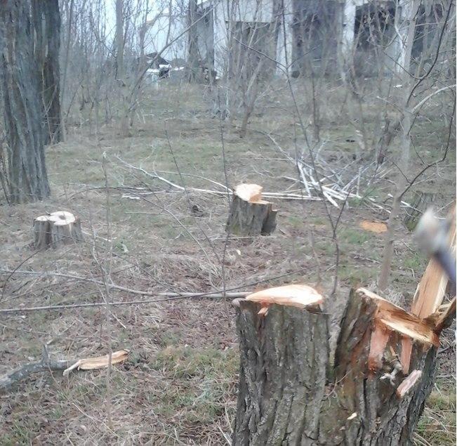 В посёлке Черноморском неизвестные вырубают деревья