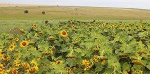Уничтожение заповедной степи в Одесской области