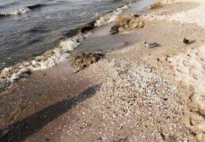 В Лузановке гниющие водоросли и жуткий запах