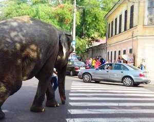 Слон гуляет по Одессе