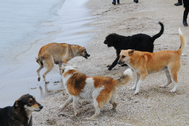 Бродячие собаки фото