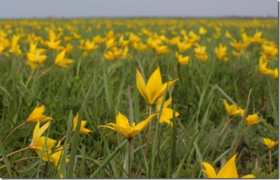 Картинки по запросу цветущая степь в Аскании фото