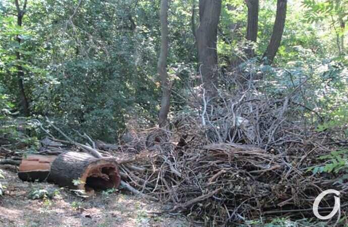 Одесские парки: катастрофа местного масштаба и туманные перспективы