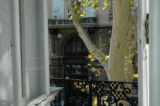 На Пушкинской будут подрезать платаны, разрушающие фасады