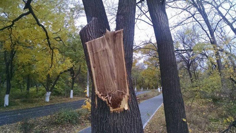 Общественники недовольны подрезкой деревьев на Трассе здоровья (ФОТО)