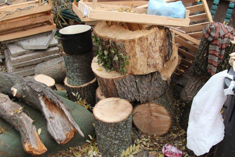 Общественники испугались за Трассу здоровья: вырублено 84 дерева (ФОТО)