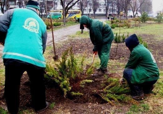 На Деревянко посадили сосны и ели (ФОТО)