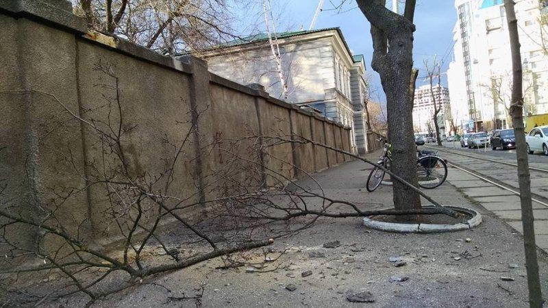 Одесские активисты зафиксировали 3 случая масштабной подрезки и спила деревьев