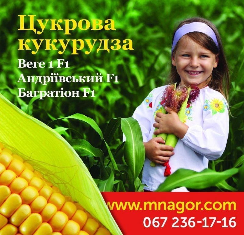 Ідеальний конвеєр від Мнагор — кукурудза ціле літо!