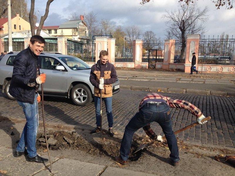 В городе запретят сажать деревья?