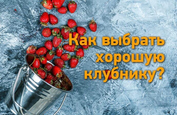 Клубничка с «перчиком»: как выбрать вкусные и качественные ягоды?
