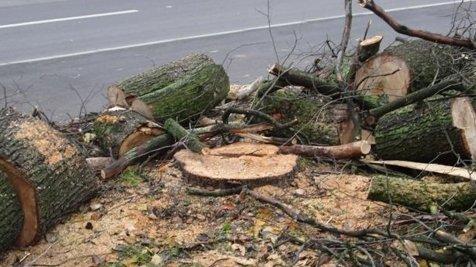Где в Одессе пилят деревья?