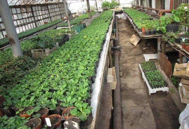 Ботсад приглашает на фестиваль для садоводов