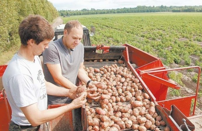 Как стать фермером в Одесской области?