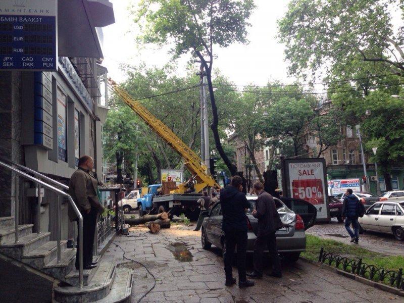 На Пушкинской упавшее дерево повредило автомобиль (ФОТО)
