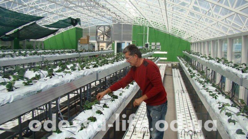 Первая теплица Нового рынка будет зимой радовать покупателей клубникой, салатом и свежими овощами