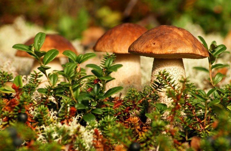 От отравления грибами скончался маленький ребенок