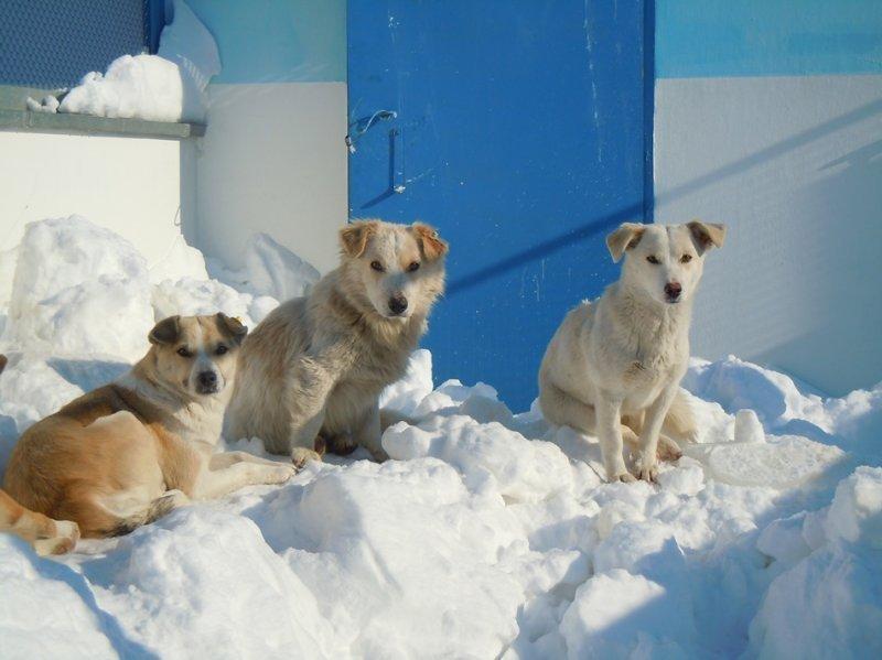 Бездомных собак в Одессе стало значительно меньше