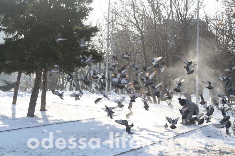 «Коньки и лопаты» или как выглядит Одесса после метели (ФОТО)