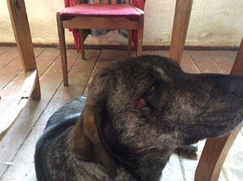 В Шабо обстреляли двор и ранили собаку винодела из Франции