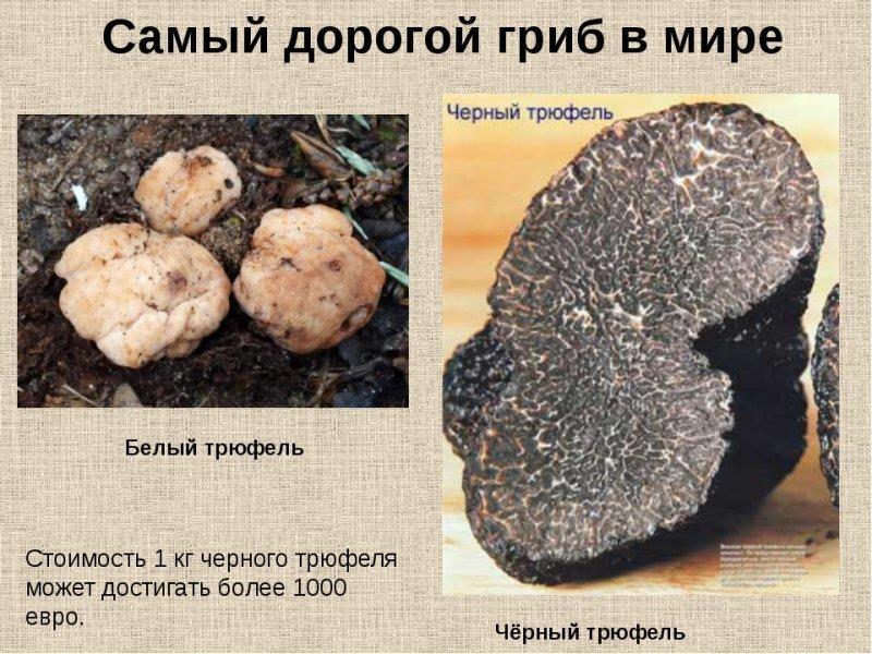Под Одессой хотят выращивать изысканный деликатес