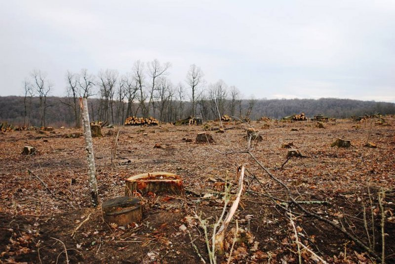Одесскую область просто бессовестно уничтожают (ФОТО)
