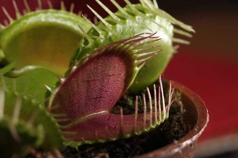 Какие растения нельзя держать дома?