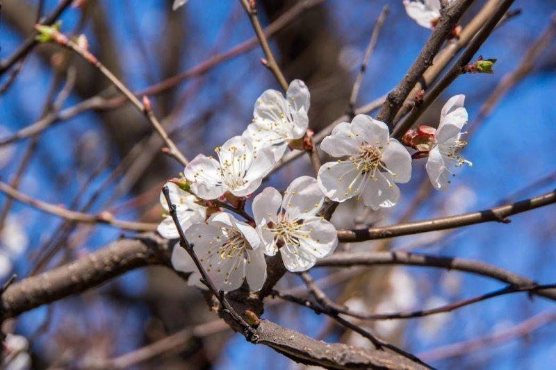Одесса цветет и пахнет (ФОТО)