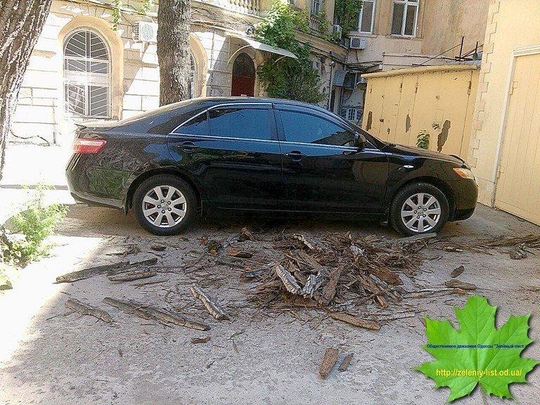 Коммунальщики и мэрия не в состоянии убрать аварийное дерево в центре Одессы (ФОТО)