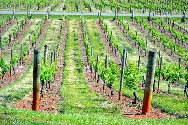 Неизвестный поджег виноградники под Одессой