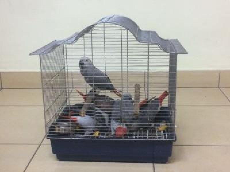 Пилот решил подработать на экзотических попугаях (ФОТО)