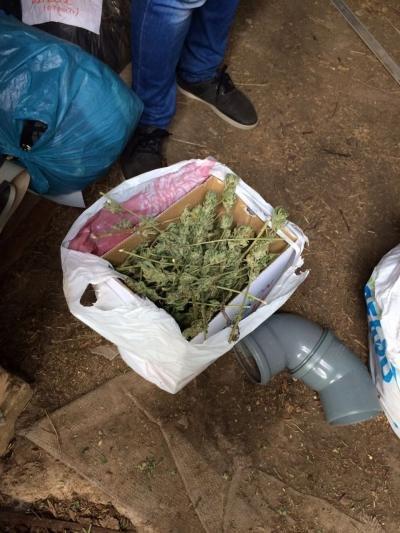 Женщина в Одесской области хотела заработать миллионы на конопле (ФОТО)