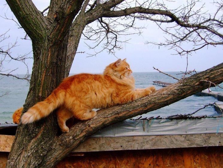 Одесские коты станут частью экосистемы города (ФОТО)