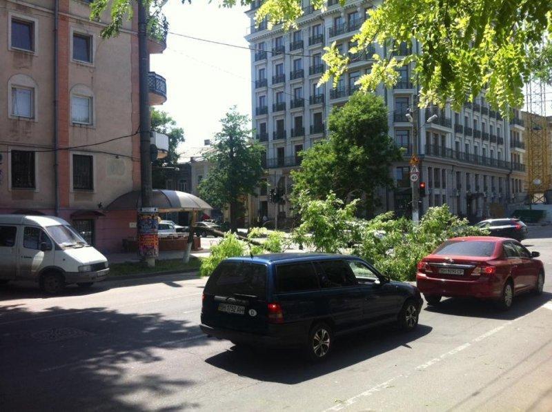В Одессе коммунальщики отказались убирать поваленное дерево с дороги (ФОТО)