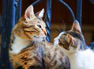Котики Одессы глазами фотографов (ФОТО)