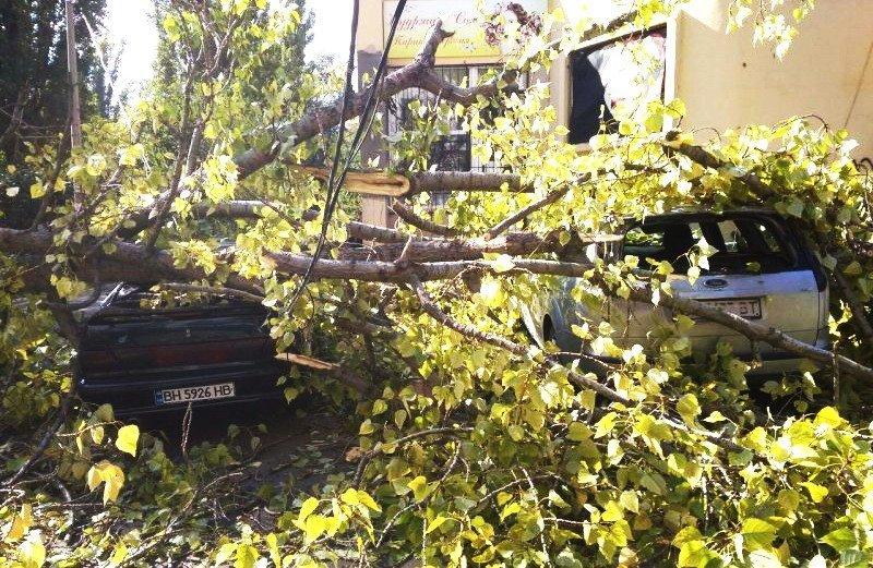 Рухнувшее дерево раздавило три машины на Таирова (ФОТО)