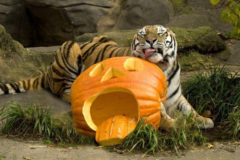 Одесский зоопарк приглашает отметить «Хэллоуин»