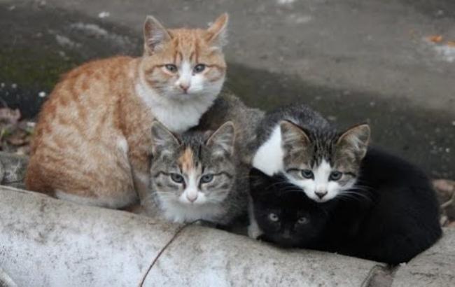 В Одессе хотят остановить страдания бездомных кошек