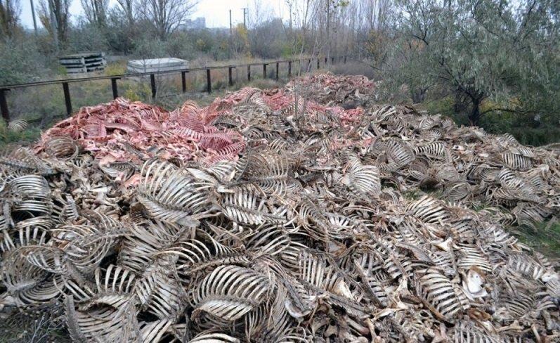 Что собирались делать с останками крупного рогатого скота на одесском предприятии?