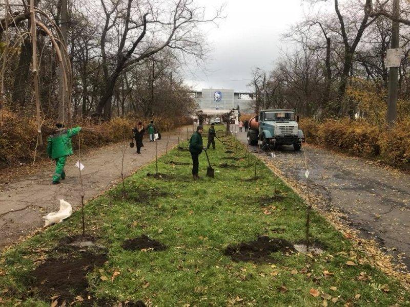 В парке Шевченко высадили сакуры