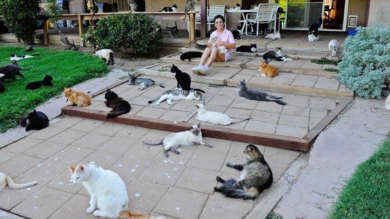 Чем кошки хуже мужей?