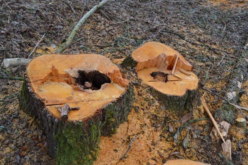 На Черемушках исчезают деревья?