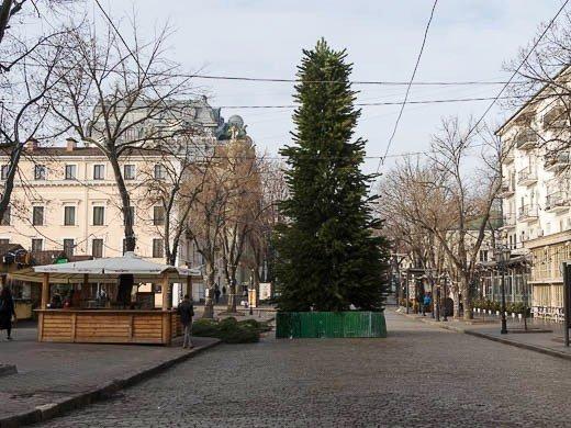 На Дерибасовской собирали ёлку из 400 сосен (ФОТО)