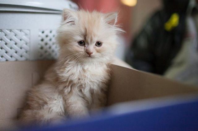 Не тронь кота! Усатые-полосатые стали частью экосистемы Одессы