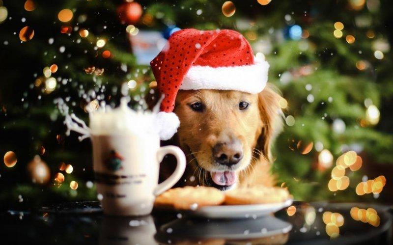 Чтобы весь год Желтая Собака виляла хвостом…