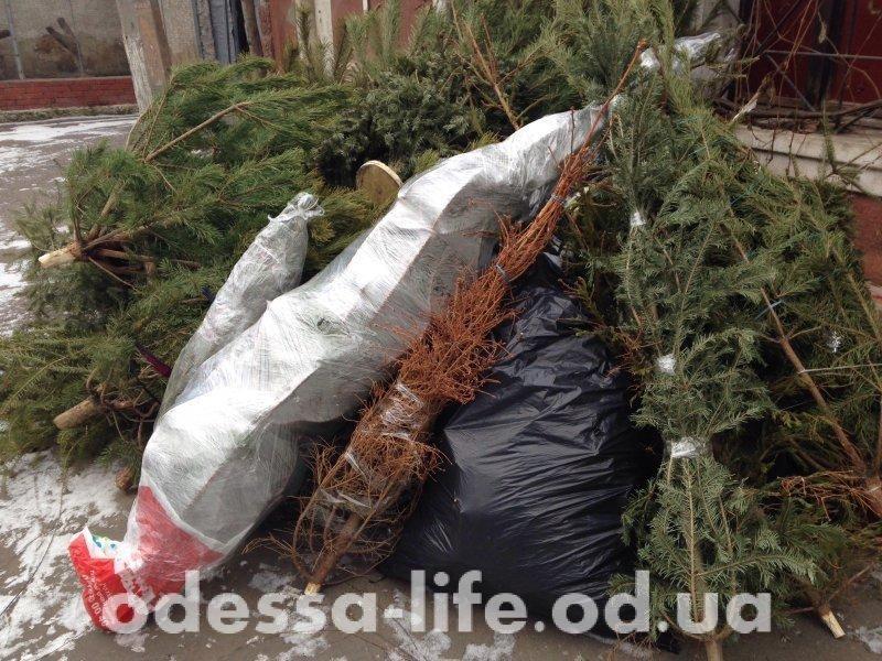 ЭКСПЕРИМЕНТ: Как «Одесская жизнь» елку выбрасывала