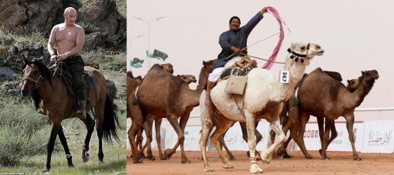 Путин, ботокс и… верблюды