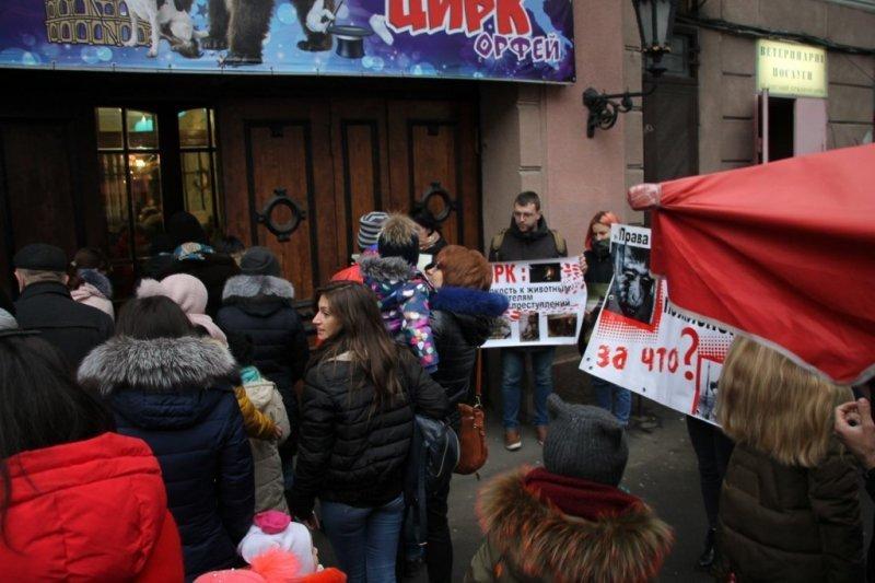 Любители животных протестовали под цирком